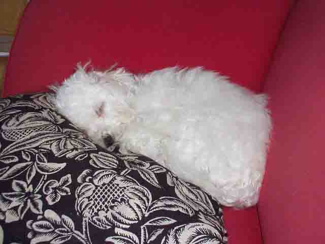 Bianca the sleeping beauty